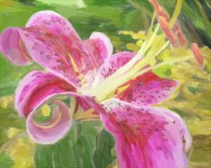 Star gazer lily