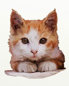 ginger-white-cat-adj